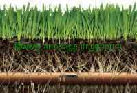 Tuyaux irrigation Goutteurs incorporés Enterrable Rain Bird DRIPLINE XFS